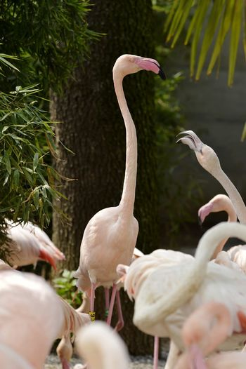 Conversation Pink Color Animal Themes Animals In The Wild Animals In The Wild Conversation Humor WeekOnEyeEm Flamingos EyeEm Selects Bird Flamingo Water Beak Curve Close-up Colony Tropical Bird Animal Wing Inner Power