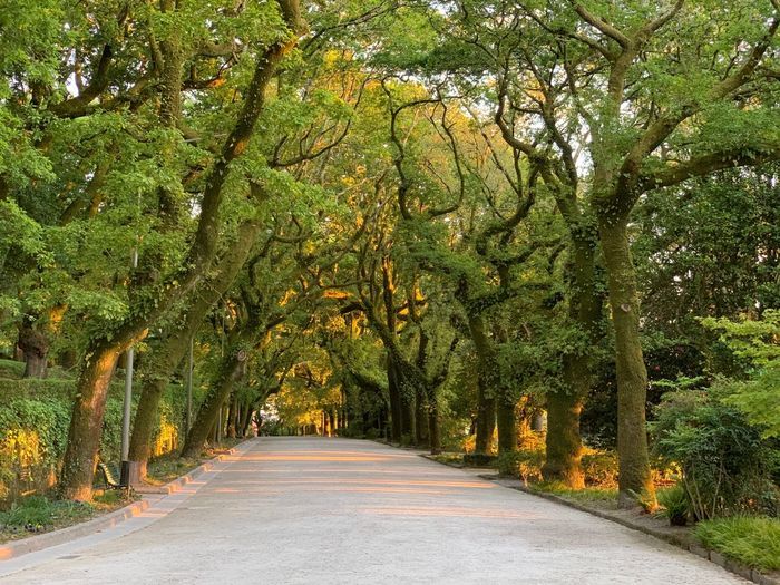 Atardecer sin filtro Tree Plant The Way Forward Direction Transportation Road Springtime Decadence Beauty In Nature Nature Green Color Tranquility Tranquil Scene Scenics - Nature