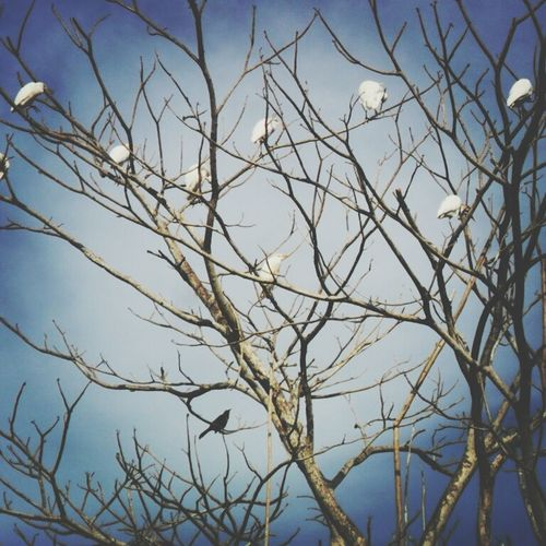 Tree And Birds :3 Paradise First Eyeem Photo
