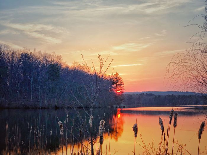 Sunset at Meadow Pond Reflection Sky Sunset Water Tree Beauty In Nature Plant Tranquil Scene Tranquility Nature No People Orange Color Outdoors Scenics - Nature Cloud - Sky Non-urban Scene Lake Silhouette