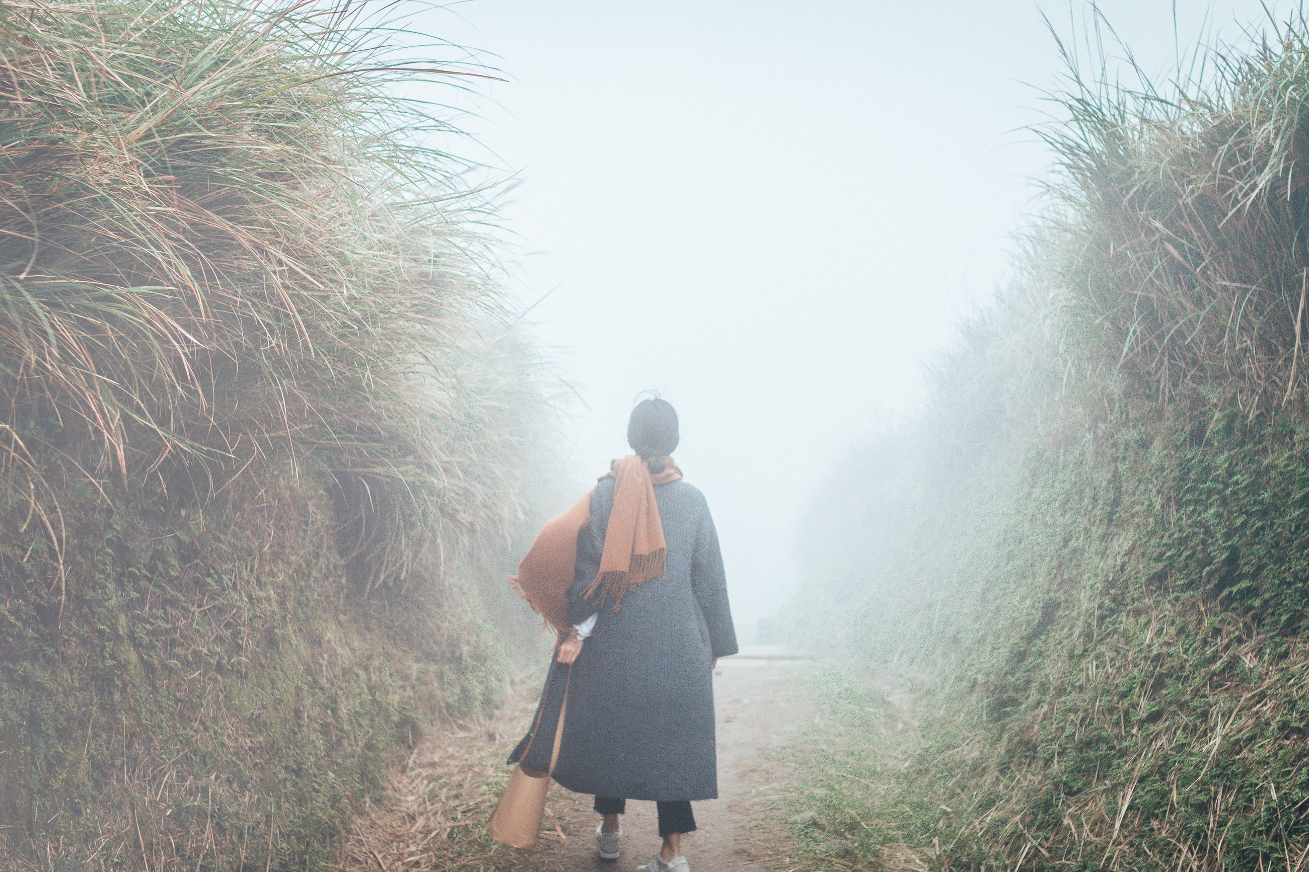 plant, one person, three quarter length, real people, nature, lifestyles, standing, leisure activity, walking, casual clothing, growth, rear view, grass, land, day, tree, beauty in nature, fog, sky, outdoors