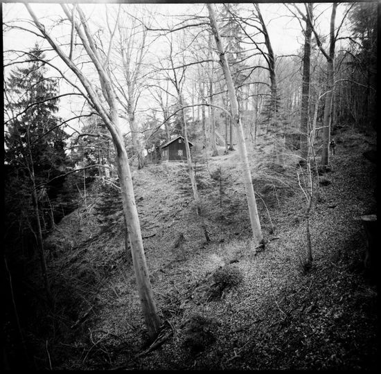 Round ways Alps Analogue Photography Birches Black And White Forrest Goldau Leaves Light Lomography Lonesome Road Mount Rigi Mountain Forrest Mountains Nature Nature Photography No People Round Way Spring Swath Swiss Alps Switzerland Travel Winding Road