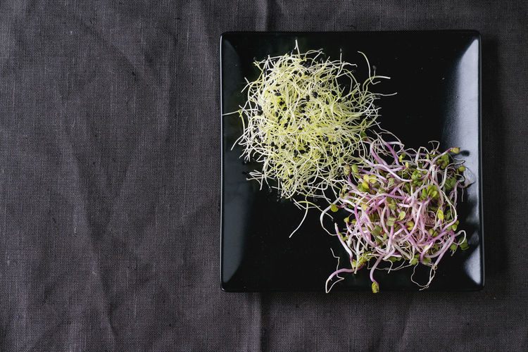 Healthy diet. Fresh Garlic and Radish Sprouts on black square plate over dark gray textile. Space for text. Top view. Copy Space Garlic Sprout Salad Sprouts Beetroot Salad Black Cloth Directly Above Food Food And Drink Food Ingredients Greens Healthy Diet Healthy Eating Minimalism Salad Mix Square Plate Top View Of Food