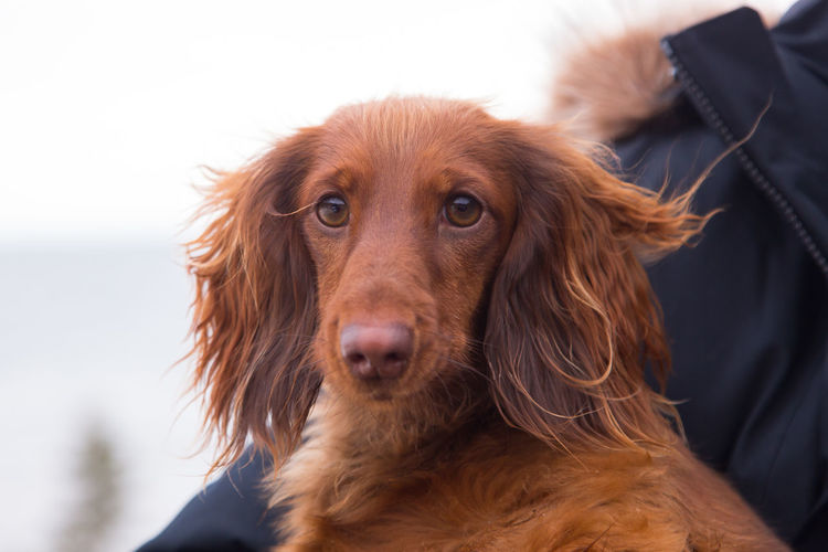 Close-up portrait of dog looking at camera