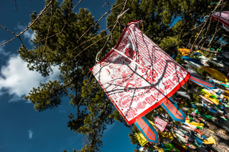 Mongolia Tree Hanging Plant No People Nature Day Red Text Focus On Foreground Sky Outdoors Branch Communication Close-up Low Angle View Lantern Decoration Sunlight Script