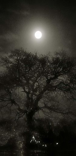 Nice moonlit