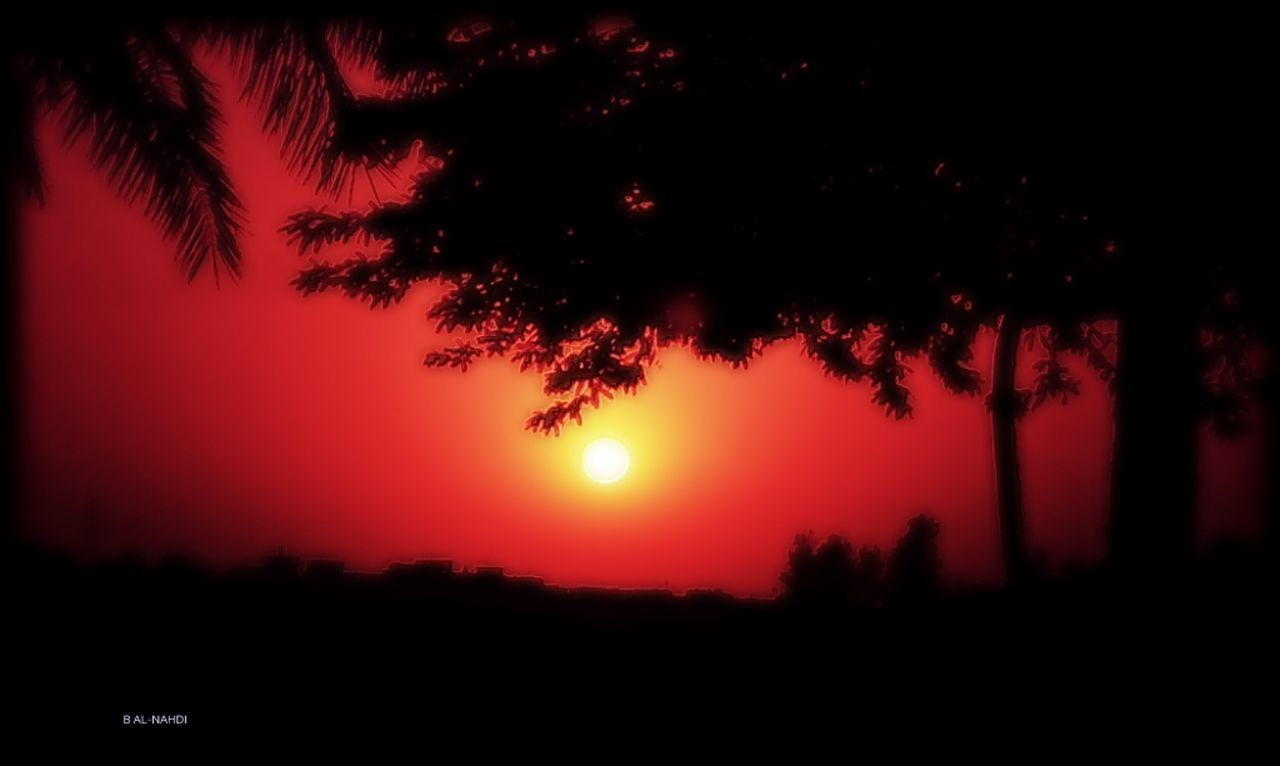 tree, sunset, silhouette, nature, beauty in nature, sun, growth, scenics, sky, no people, outdoors, moon