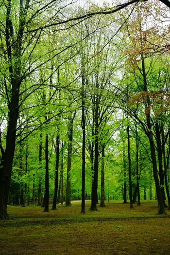 forest Nature