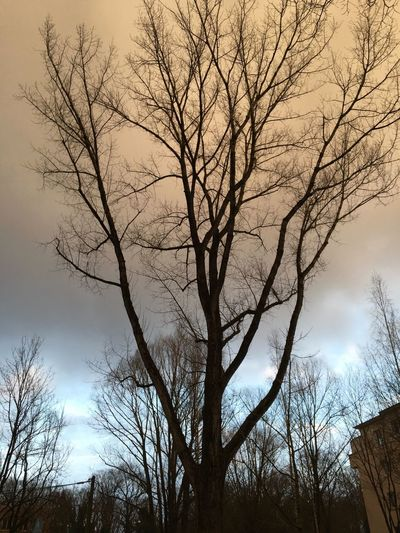 Sahara Sand in the air, Sahara Sand In The Air Bare Tree Tree Branch Nature Low Angle View Sky No People Outdoors Beauty In Nature