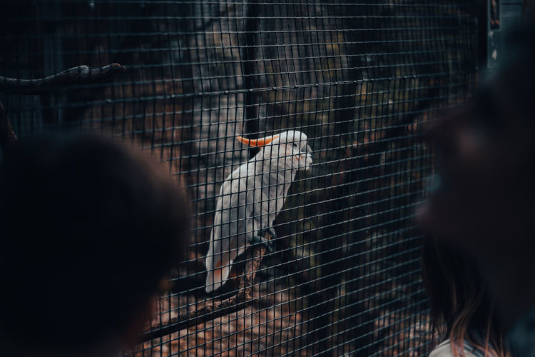 Rear view of bird in cage