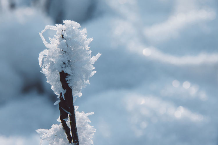 Close-Up Of Frost On Twig