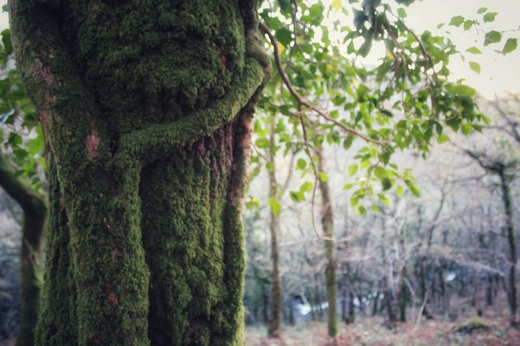 tree hug Hug