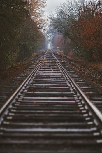 On track Fall Autumn Oregon PNW Rainy Days Tree Water Railroad Track Rail Transportation Sky Railway Track Track vanishing point Diminishing Perspective Straight Rainy Season Train Track Treelined The Way Forward Railroad