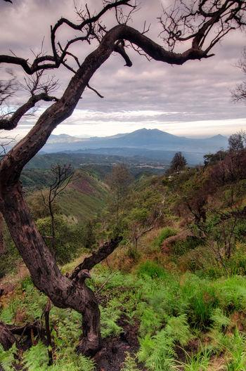 kingkong hill