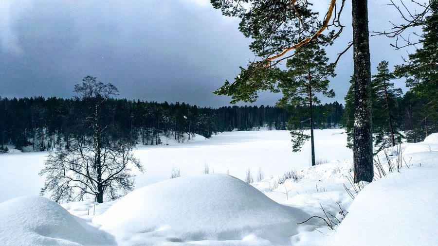 Tree Snow Snowing Frozen Water Cold Temperature Winter Mountain Frozen Polar Climate Snowflake