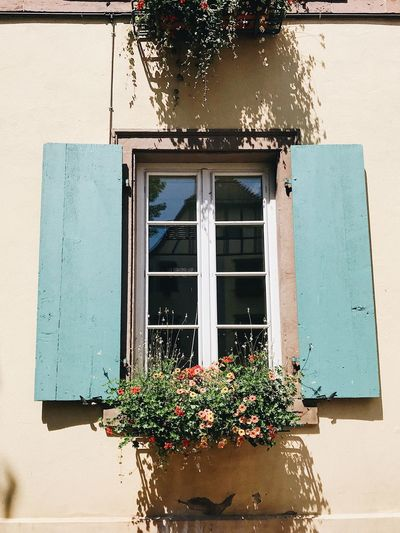 Low angle view of potted plant on window of house