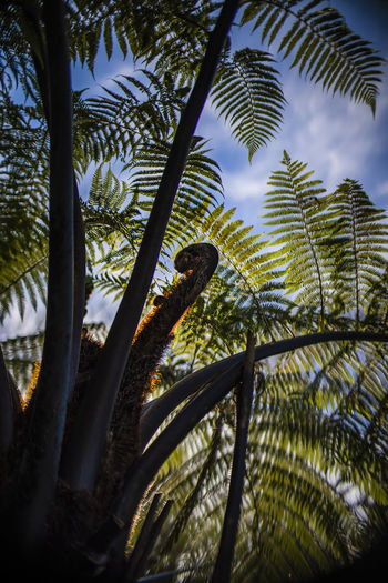 Aotearoa Beauty In Nature Branch Day Fern Growth Low Angle View Nature New Zealand Natural No People Outdoors Plant Sky Tree Tropical Climate
