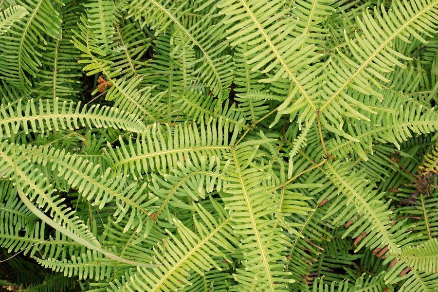 Nature Leaves Leaf Harmony Grass Day Fern Growth Beauty In Nature Outdoors Close-up No People