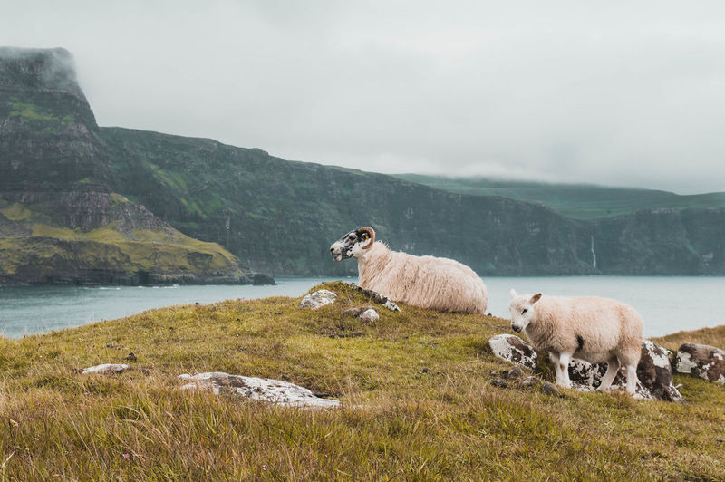 View of sheep on mountain against sky