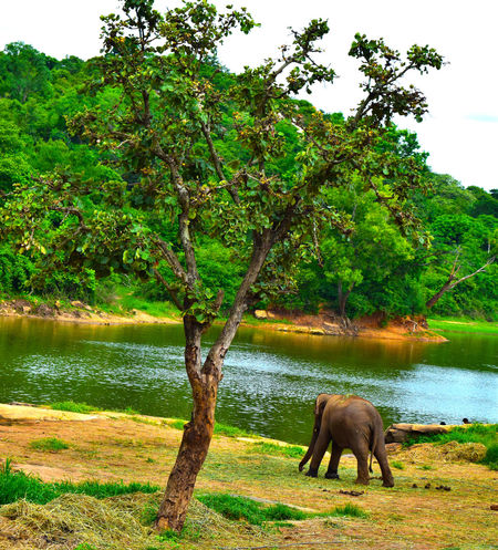 BannerghattaNationalPark Kingofthejungle Lakeshore Nature Relaxing Safari Tree