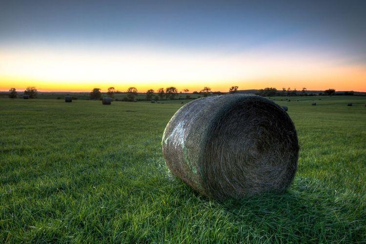 Hay Day. Beauty