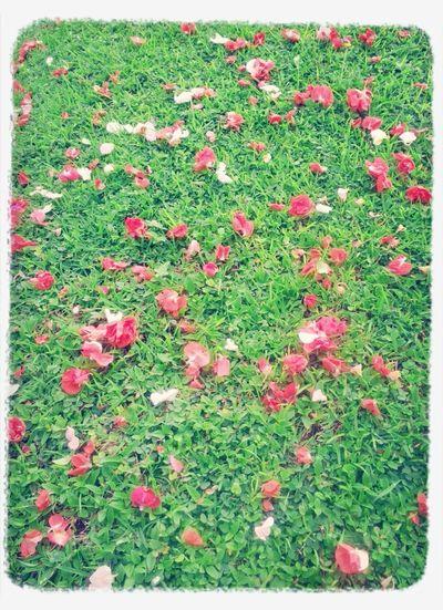 fields of flower Taking Photos Flowers