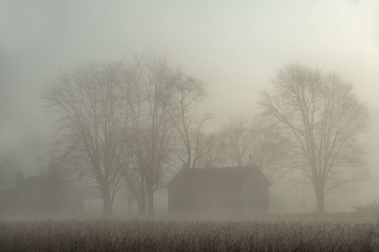 Bare trees on field against foggy weather