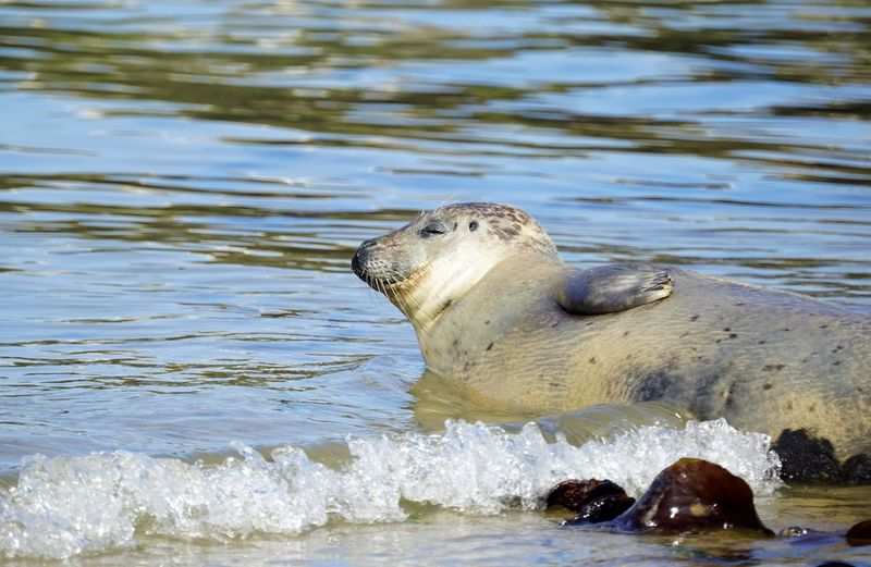 Water Sea Life