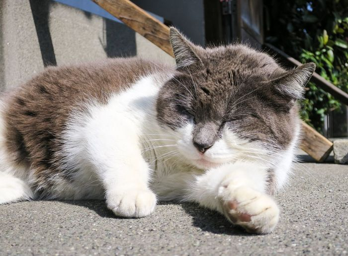 Stray Cat Cat Gato Relaxing Zzz EyeEm Best Shots Matsuko at Enoshima 江の島 in Japan