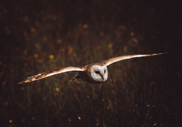 Close-Up Of Bird Flying At Night