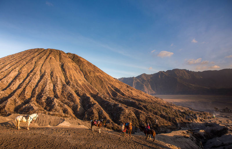 Horses at Bromo Tengger Semeru National Park, Indonesia Adult Animal ASIA Day Desert Horse INDONESIA Landscape Large Group Of People Mountain Nature Outdoors People Sand Scenics Sky Tourist Tourist Attraction  Tourist Destination Volcanic  Volcanic Landscape