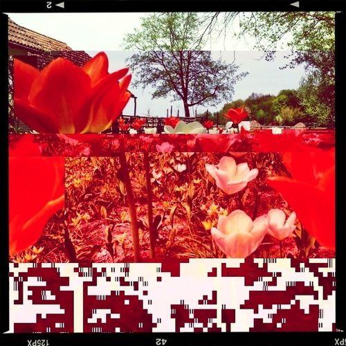 Flowers Glitch