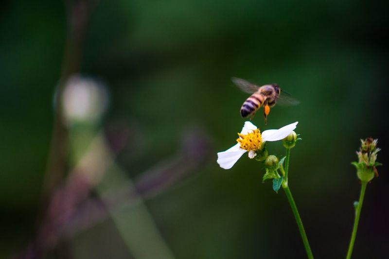 Working Flower Animal Wildlife Animals In The Wild Animal Themes Flowering Plant Insect Fragility Beauty In Nature Vulnerability  One Animal Focus On Foreground Close-up Petal Flower Head Bee Invertebrate Plant Animal Freshness Growth EyeEmNewHere