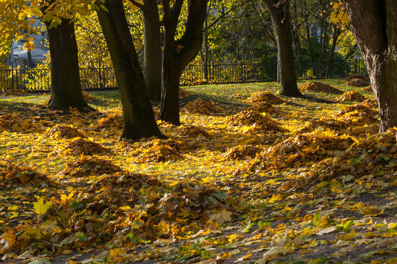 Colorful Leaves Autumn Beauty In Nature Day Forest Leaf Nature Sunlight Tree Tree Trunk Yellow