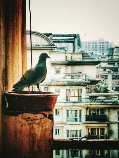 Close-up of seagull perching on city against sky