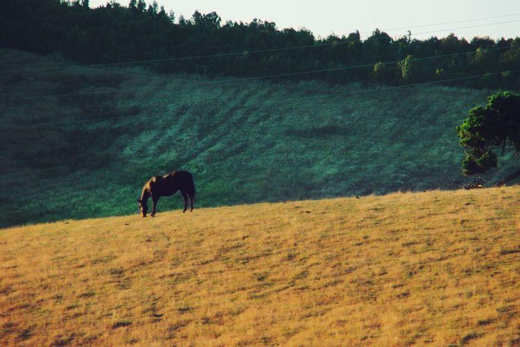 Silence Horse