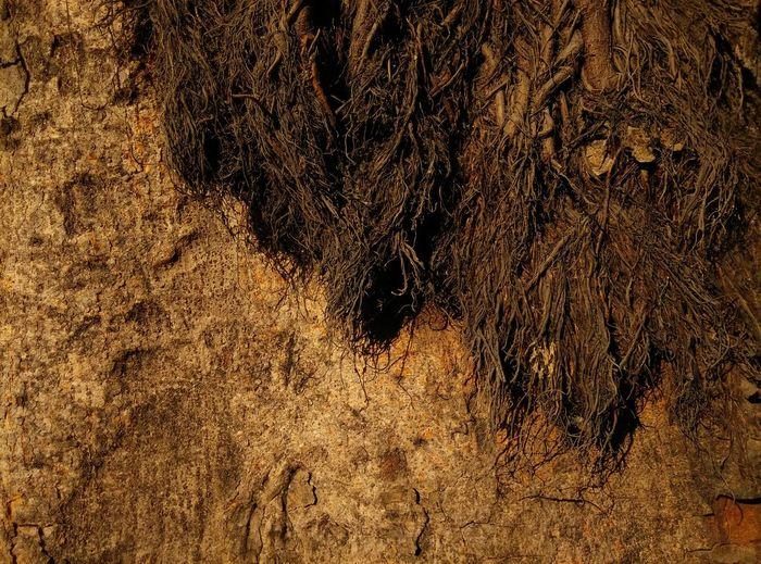 Yes, I Am A Photographer Special👌shot Nature Tree TreePorn Treebark