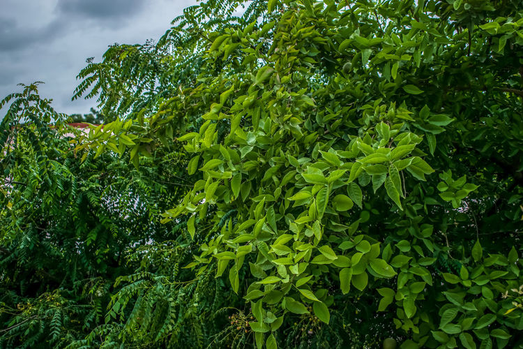 Tree Forest Leaf Green Color Growing Toadstool Stalk Mushroom Creeper Plant Ivy Cattail Bud Young Plant Fungus Green Plant Life Blooming Leaves Countryside Fern Greenery Growth Stem #urbanana: The Urban Playground Urban Fashion Jungle HUAWEI Photo Award: After Dark