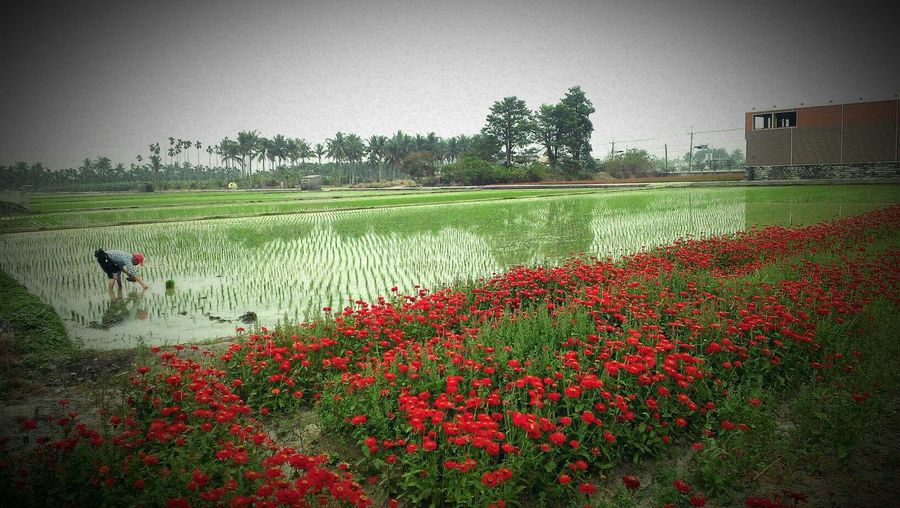 the red and the green Nature_collection