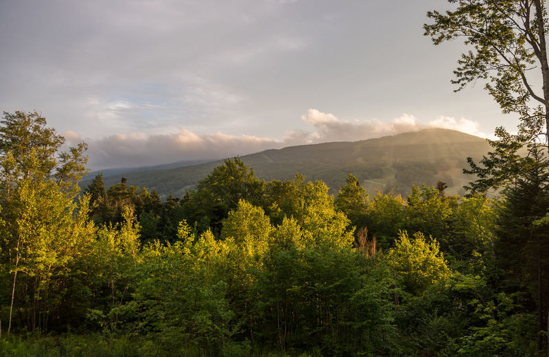 View of trees on landscape against mountain range