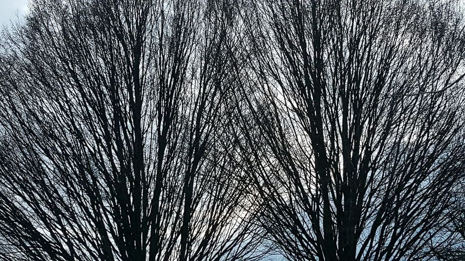 Trees And Sky Trees Nature Branches Mobile Photography S6photography Coldweather London Home From Work Blue Sky Twin Trees Bare Trees Bare Branches