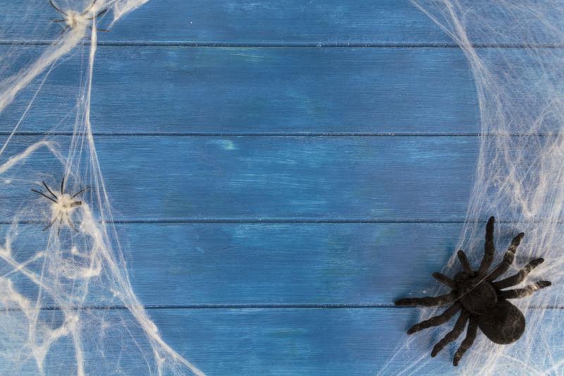Full frame shot of spider on wall