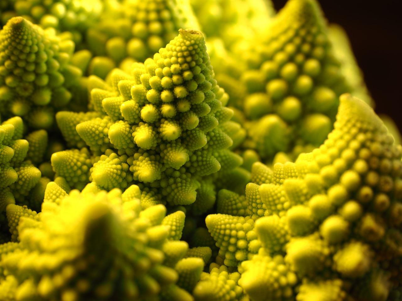 Close-up of romanesco cauliflower