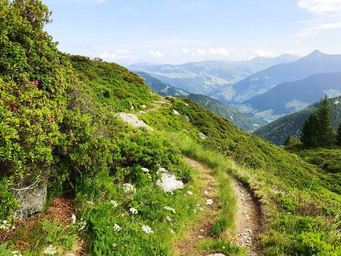 The Way Forward Hiking Trail Path Alps Nature Beauty In Nature Mountain Growth Agriculture Day Outdoors Scenics Lush Foliage Green Color Mountain Range Sky Landscape No People Tranquility Plant