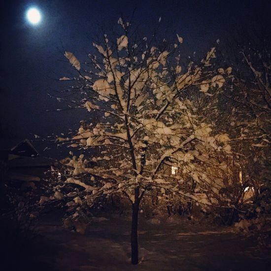 WinterinSweden IcecoldBorås Fullmoon At The Sky Cherriestree Somuchsnow Beautifulsweden Lifeisadream Nofilter#noedit