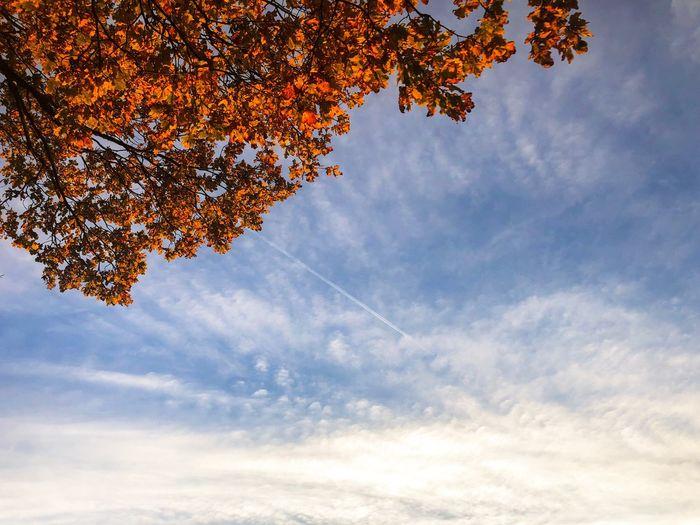 •autumn• EyeEm