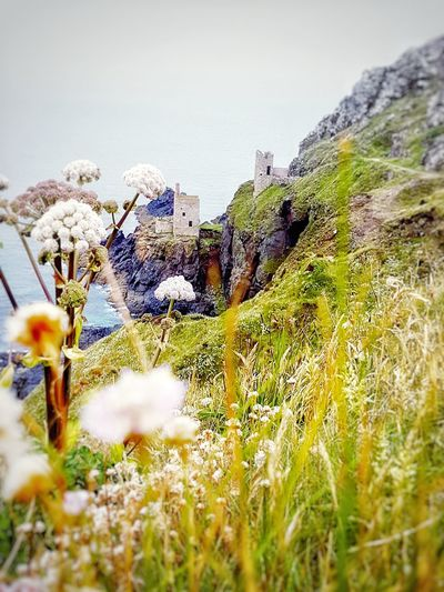 Cornwall Outdoors Romantic Nature Beauty In Nature Sky Day