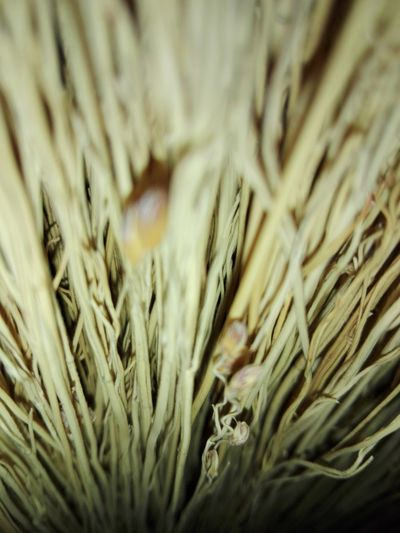 close-up broom Broom Close-up Broom Close-up Close-up No People Backgrounds No Human No Person Selected For Premium WOLFZUACHiV PREMiUM Huaweiphotography Eyeem Market Ionita Veronica Veronica Ionita WOLFZUACHiV Photos Wolfzuachiv On Market Huawei Photography WOLFZUACHiV Photography Veronica IONITA Photography Growth Seeds Straws Full Frame Day