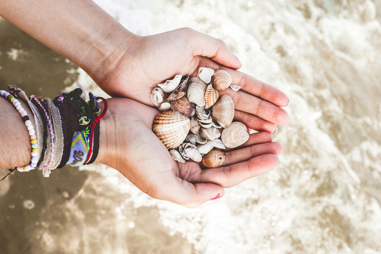 Close-up of woman hand holding shells on beach