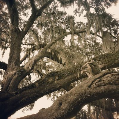 Oh Baby It's a Wild World Tree Oak Nature Bestagram photooftheday instagood climbtrees